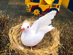 «День птиц»